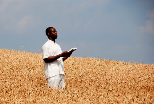 African man holding a Bible and standing in a field of wheat asking for a Sabbath blessing from God