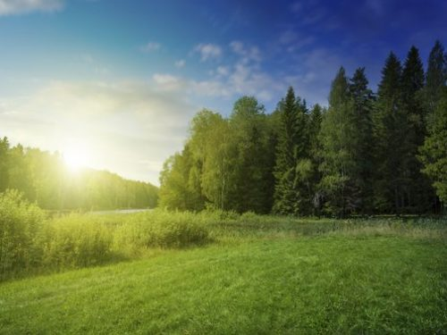 A sunrise in a meadow next to a line of trees.
