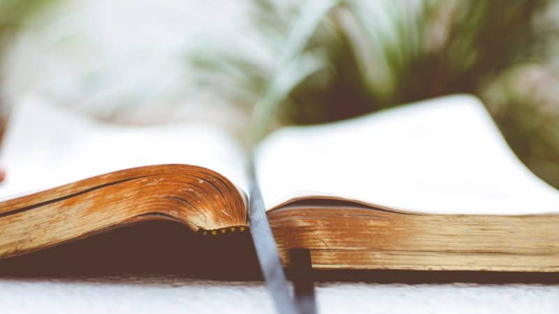 Bible open in front of a green plant