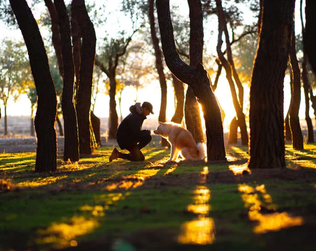 A man outside with his dog surrounded by trees with the setting sun shining through.