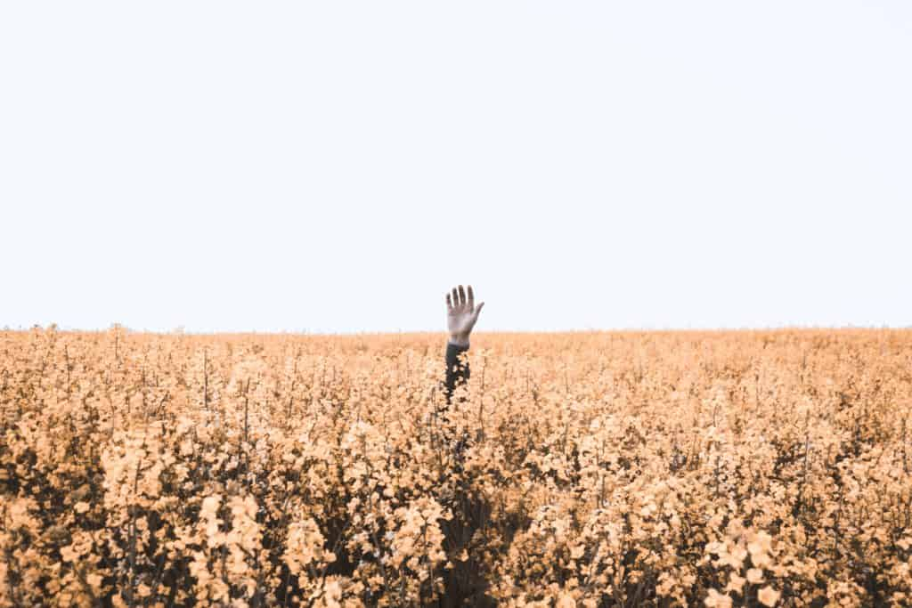 A hand reaching up out of a field towards the sky.