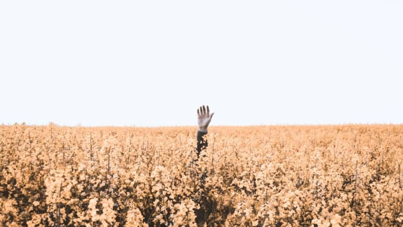 a hand reaching up out of a field of yellow flowers toward the sky asking for help to survive life