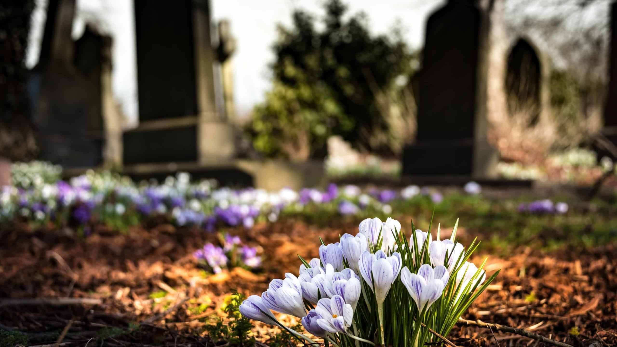 Flowers blooming with headstones in the background.