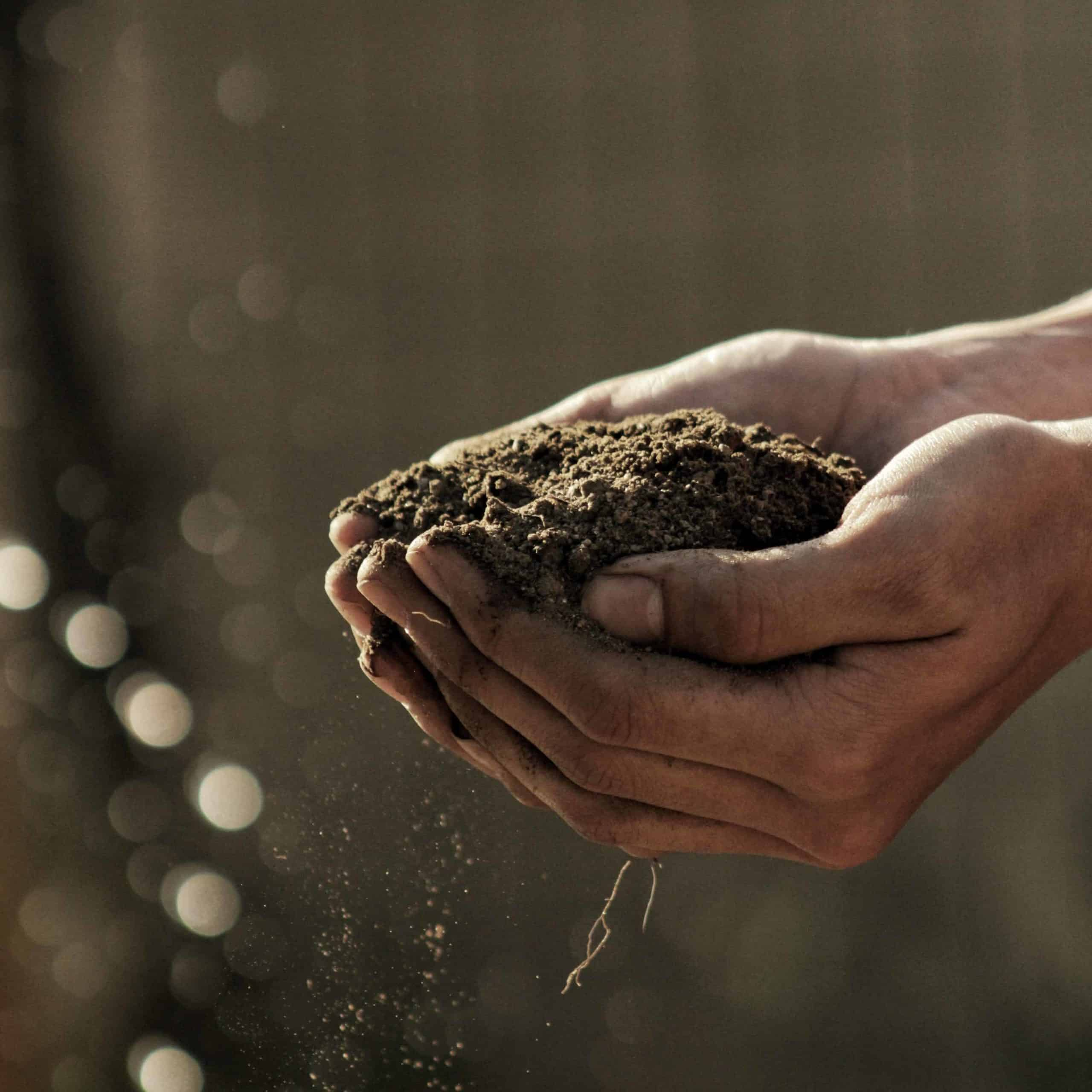 A close-up of hands holding dirt.