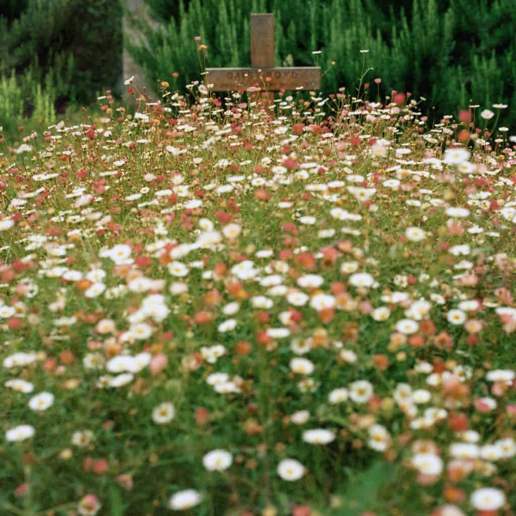 Wildflowers covering a grave.