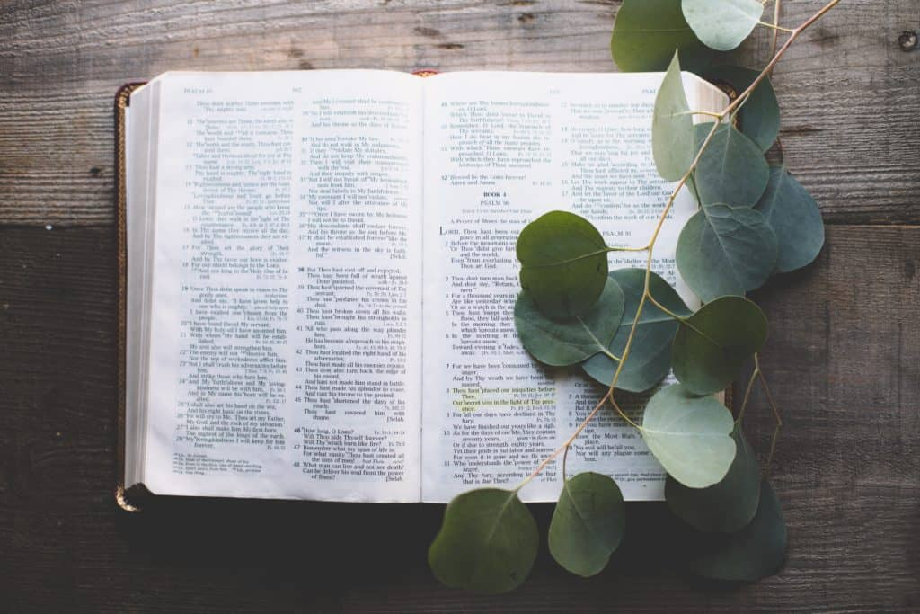 The Bible open on a wooden table with a branch over it.