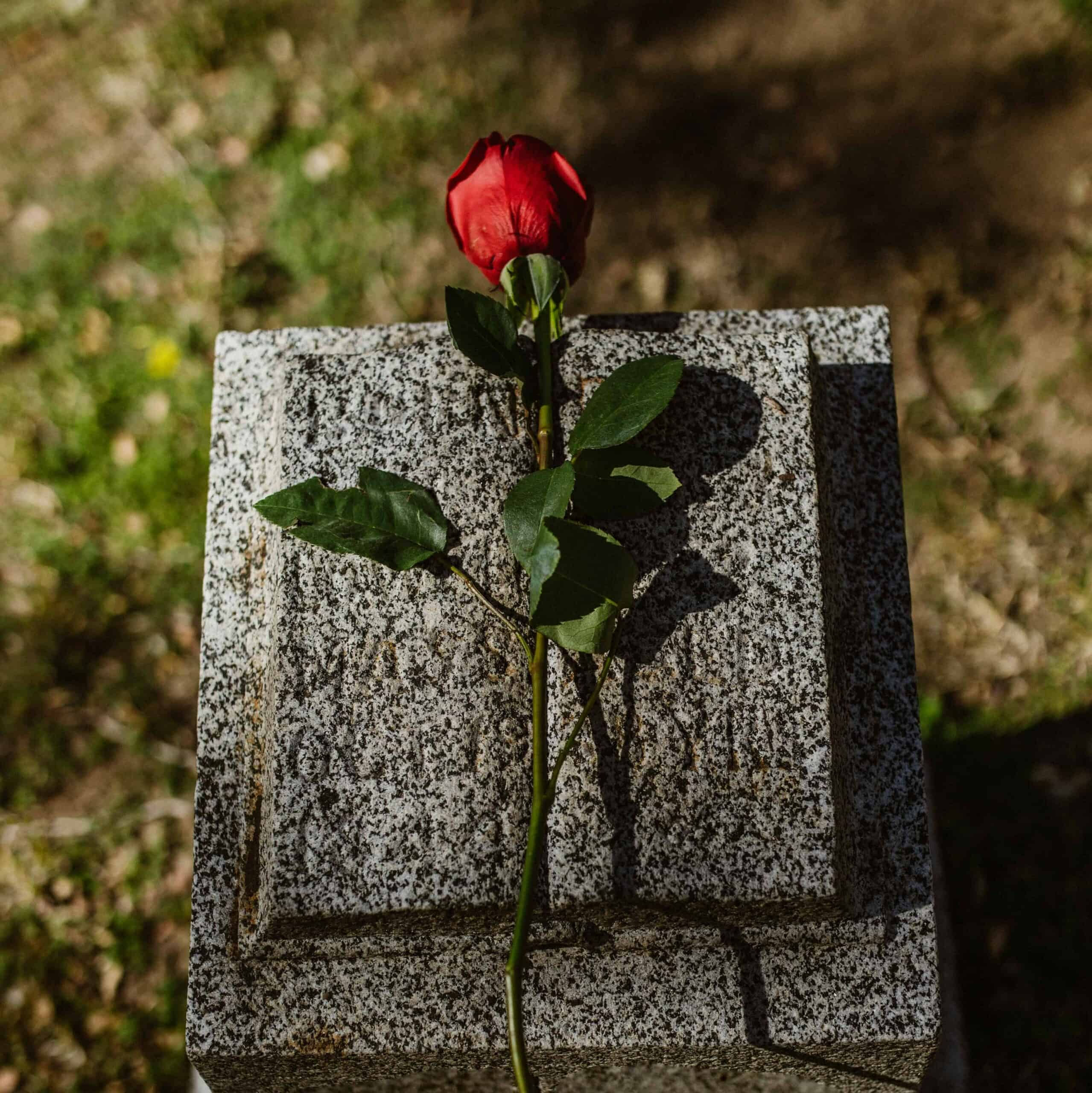 A rose laying on a headstone.